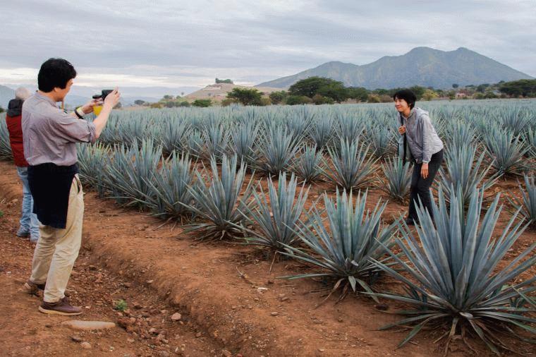 Tequila Trail Tour (José Cuervo Distillery)